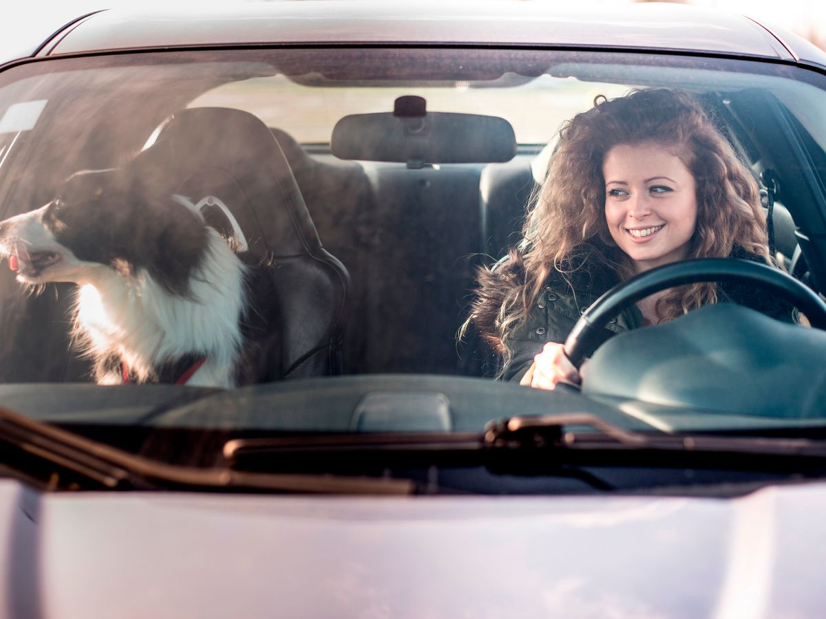 2_Woman-driving-car-dog-sitting-on-passenger-seat