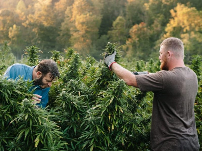 young-hemp-farmers-cannabis-cbd-green-rush-3-Mike-Lewis-and-Shelby-Floyd-Third-Wave-Farms-credit-Anna-Carson-DeWitt-Photography-1200x800